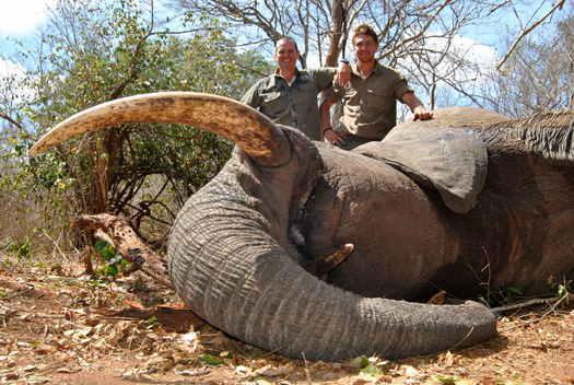 550 Magnum & Elephant