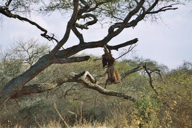 Bait Tree