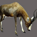 Blesbok Full Mount