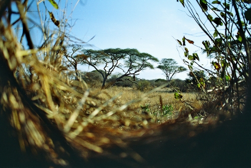 View From Leopard Blind