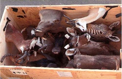 Taxidermy Box