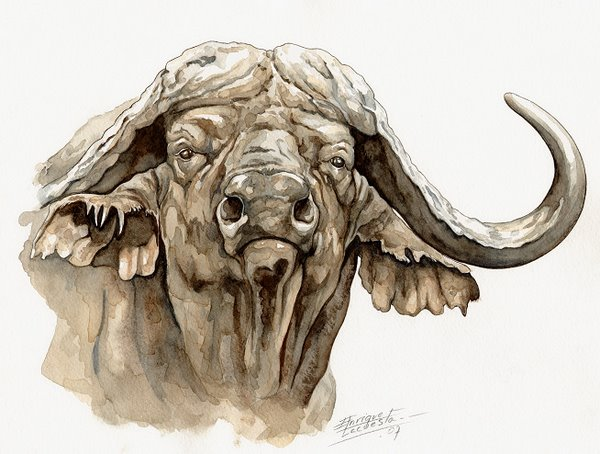 Cape Buffalo Watercolor 1