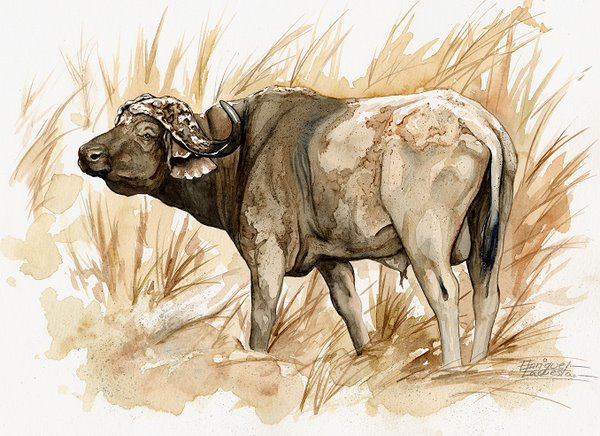 Cape Buffalo Watercolor 2