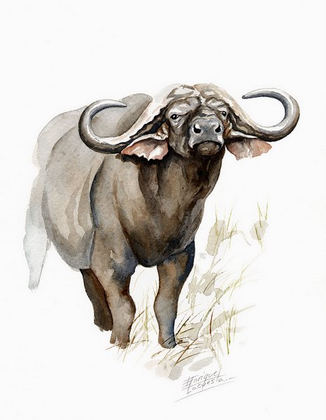 Cape Buffalo Watercolor 3