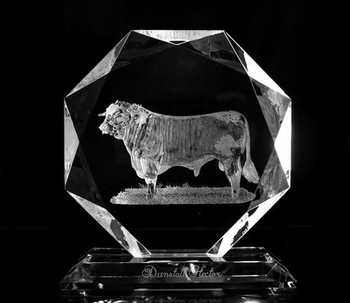 Crystal Glass Bull Portrait