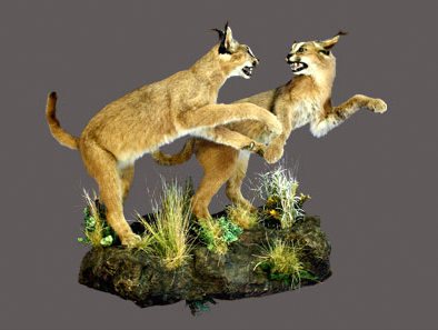 Caracal Full Mount