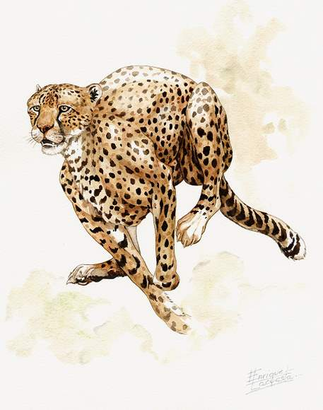 Cheetah Watercolor 2