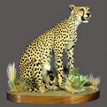 Cheetah Full Mount