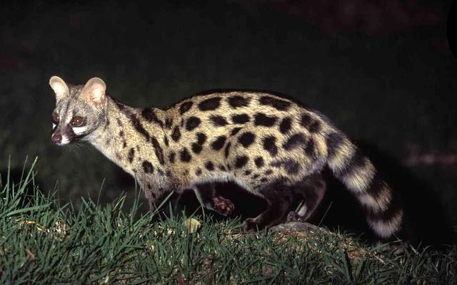 Common Genet