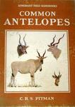 Common Antelopes