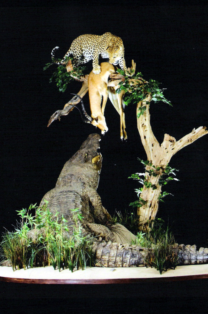 Crocodile, Leopard & Impala Full Mounts