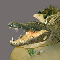 Crocodile Full Mount