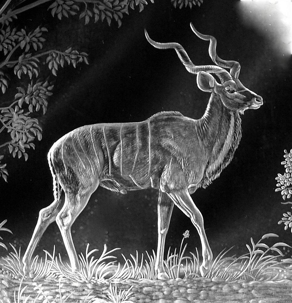 Crystal Block Close-Up of Kudu
