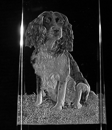 Crystal Book Spine with Spaniel Close Up