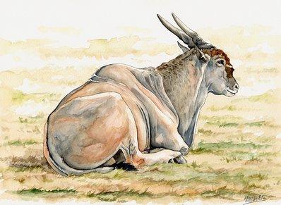Eland Watercolor
