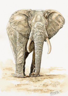 Elephant Watercolor 2