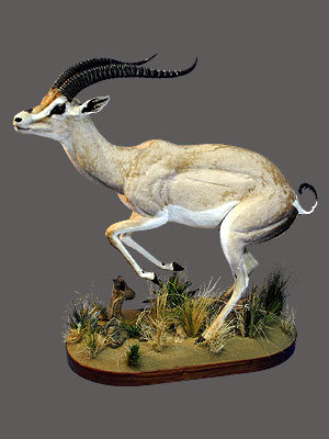 Gazelle Full Mount