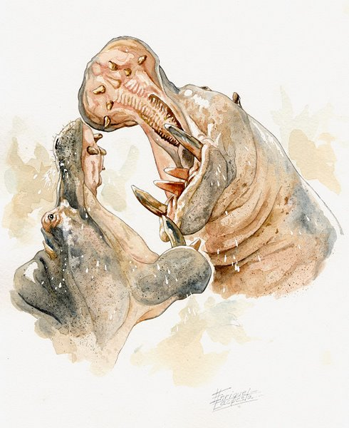 Hippo Watercolor 5
