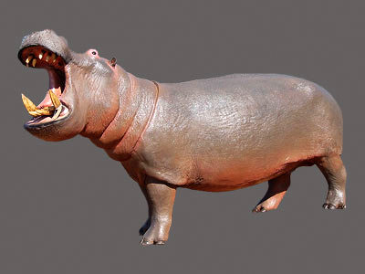 Hippo Full Mount