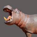 Hippo Full Mount