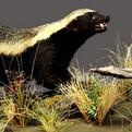 Honey Badger Full Mount