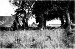 Photograph: Lion Camp