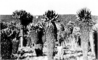 Photograph: Giant Cactus Growth In the Crater