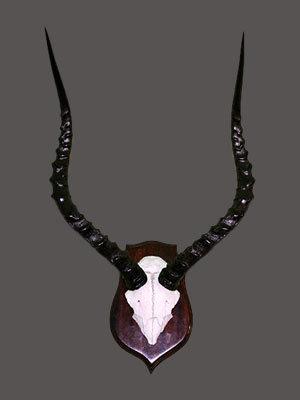 Impala Skull Mount
