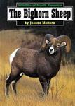 The Bighorn Sheep
