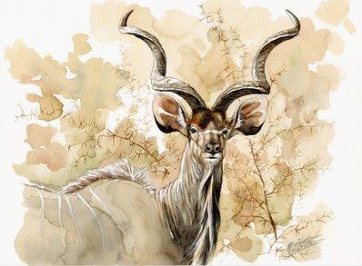 Kudu Watercolor