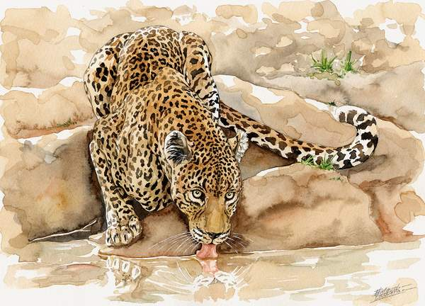 Leopard Watercolor 1