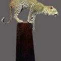 Leopard Pedestal Mount
