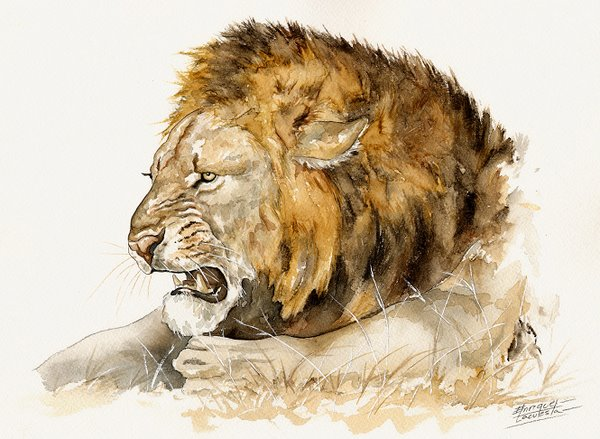 Lion Watercolor 1