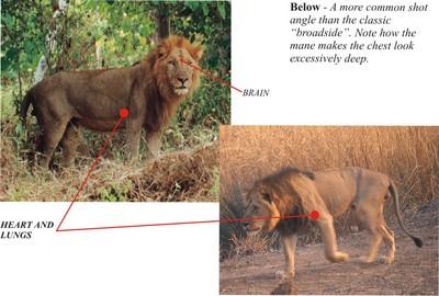 Lion Shot Placement