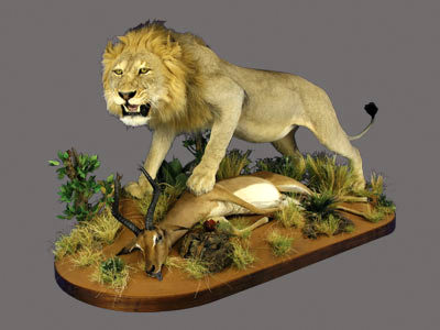 Lion Full Mount