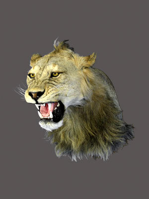 Lion Shoulder Mount