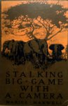 Stalking Big Game With A Camera In Equatorial Africa