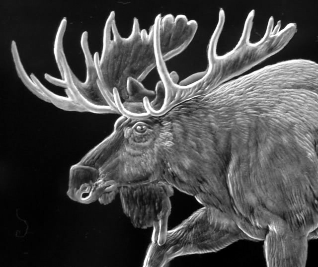 Crystal Plaque with Moose Close Up