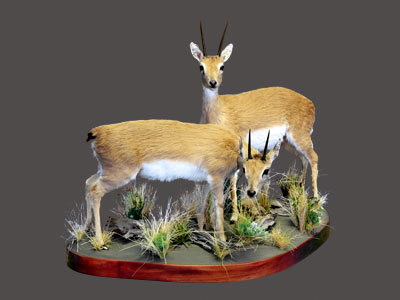 Oribi Full Mount