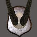 Gemsbok Skull Mount