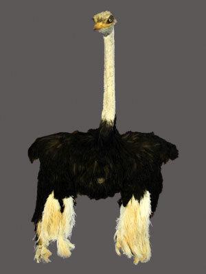 Ostrich Half Mount