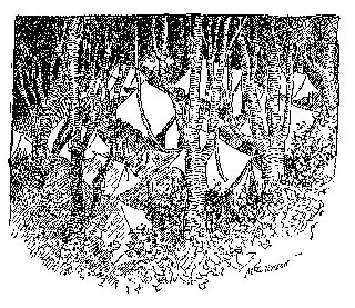 Drawing: Camp in the Forest
