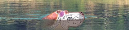 Shooting Hippo