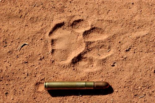 Leopard Spoor