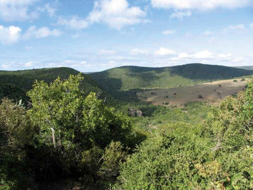 Bushbuck Habitat