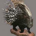 Porcupine Full Mount