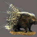 Porcupine Full Mount