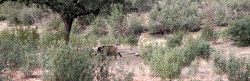 Portuguese Wild Boar Country