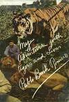 My Adventures With Tigers And Lions