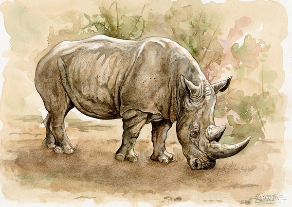 Rhino Watercolor 2